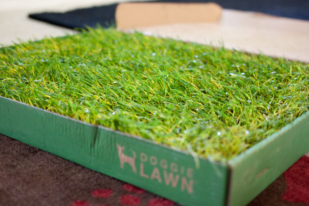 rigby reviews doggie lawn / product review / hello, rigby!