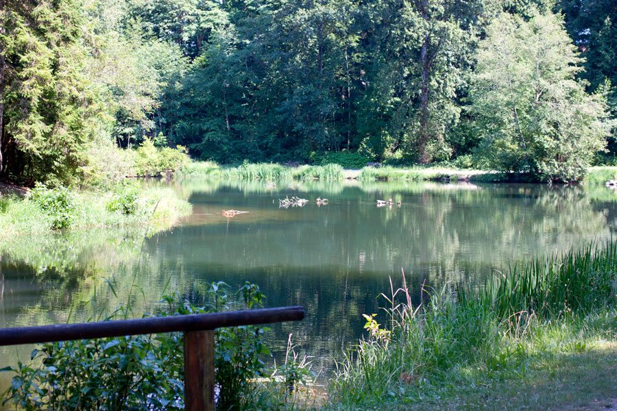 Whatcom Falls Pond / Bellingham Adventures / hellorigby!