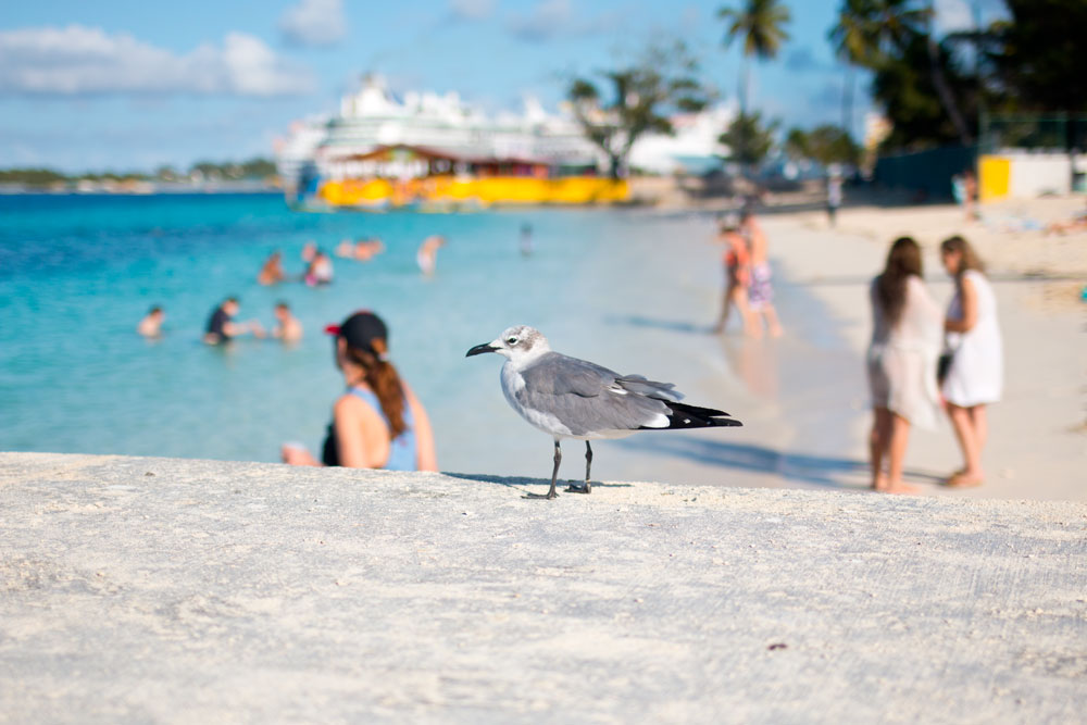 Seagull on Dock in Junkanoo Beach, Nassau, Bahamas - hellorigby seattle lifestyle and fashion blog