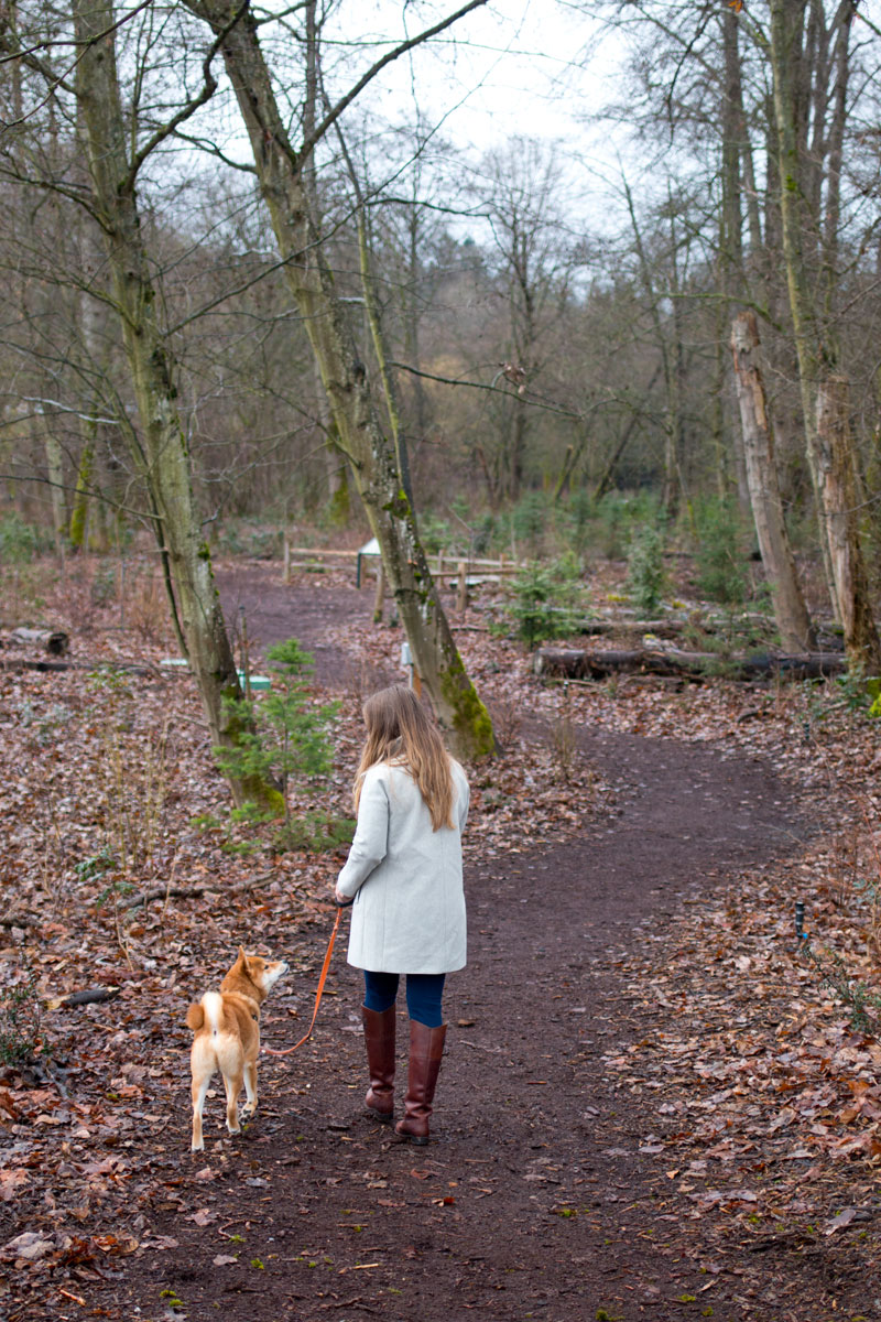 Walking Rigby, Shiba Inu, in forest / hellorigby seattle fashion and lifestyle blog
