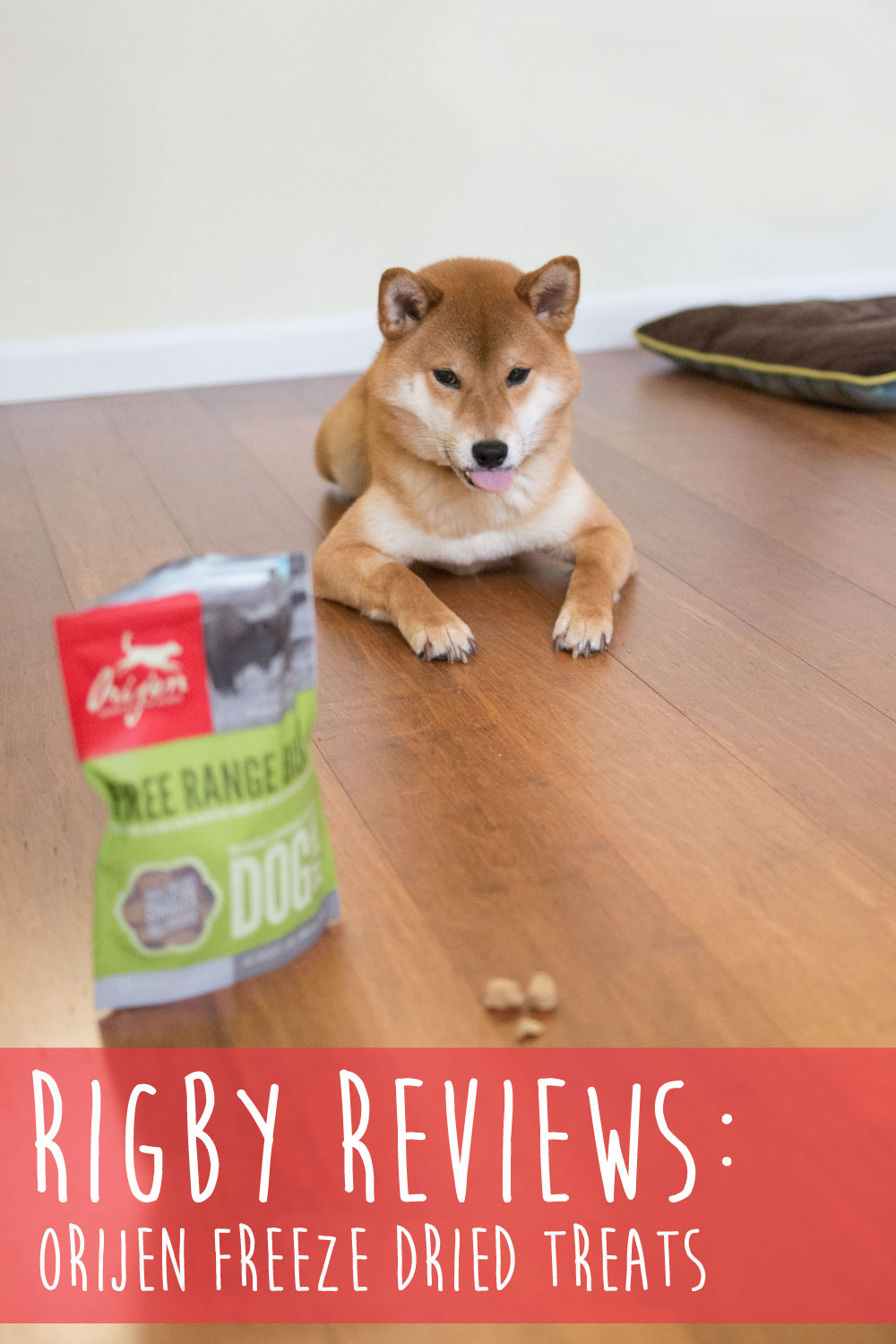 Rigby Reviews: Orijen Freeze Dried Treats in Bison Review / hellorigby lifestyle and dog blog