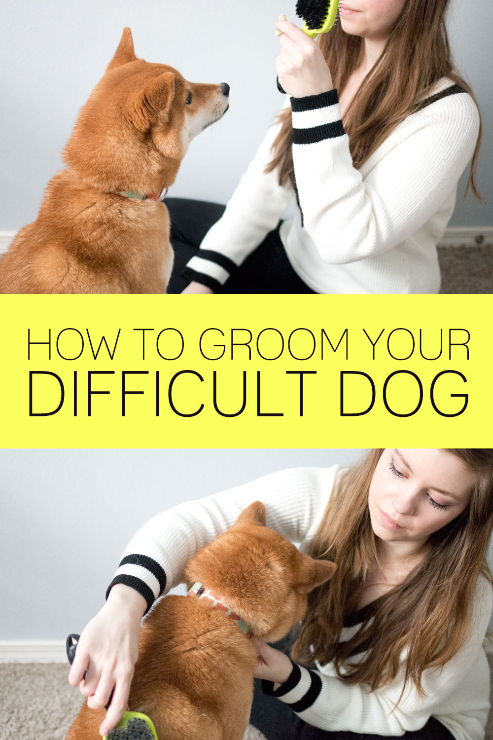 How to Groom a Difficult Dog / hellorigby seattle lifestyle and pet blog