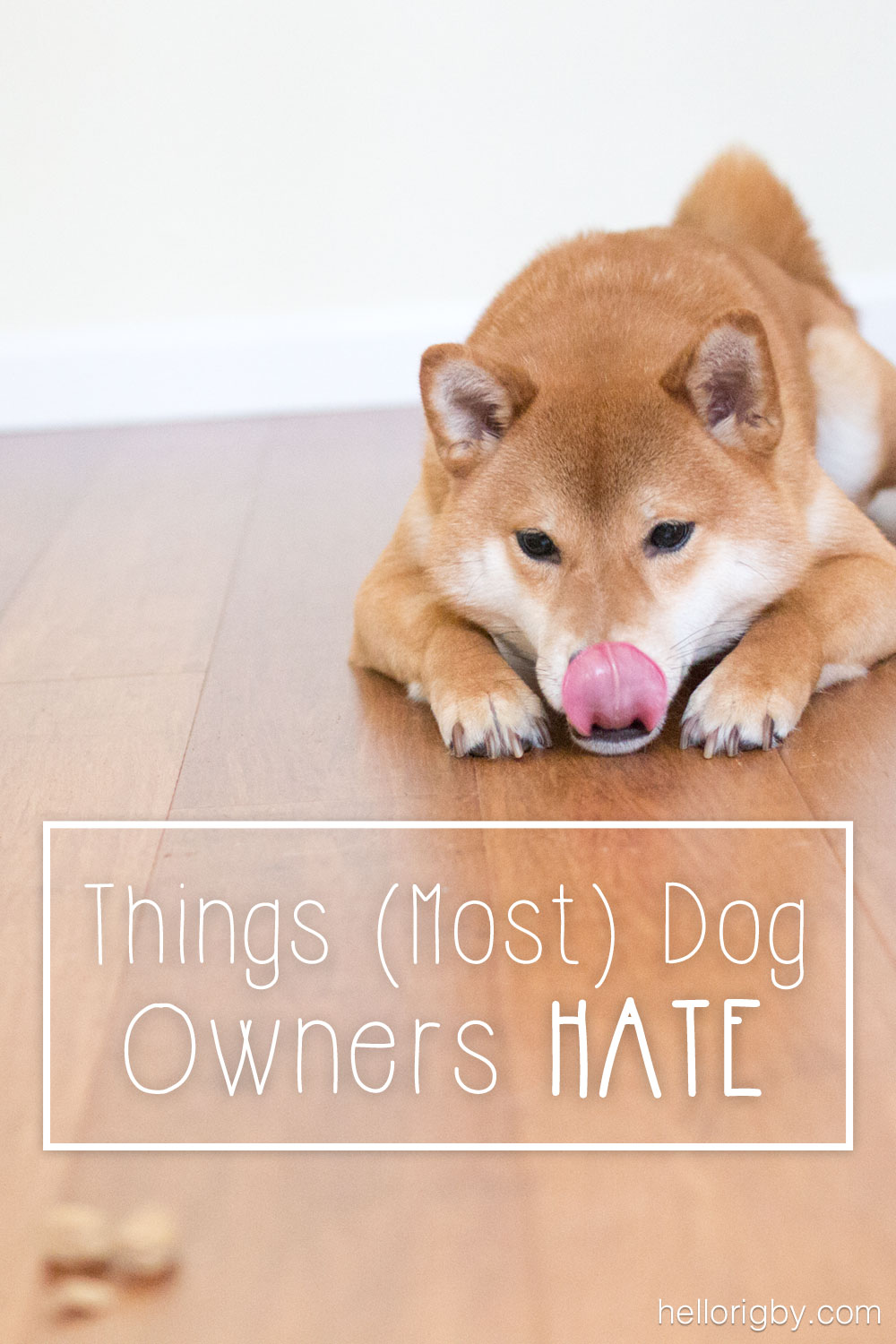 Things (Most) Dog Owners Hate