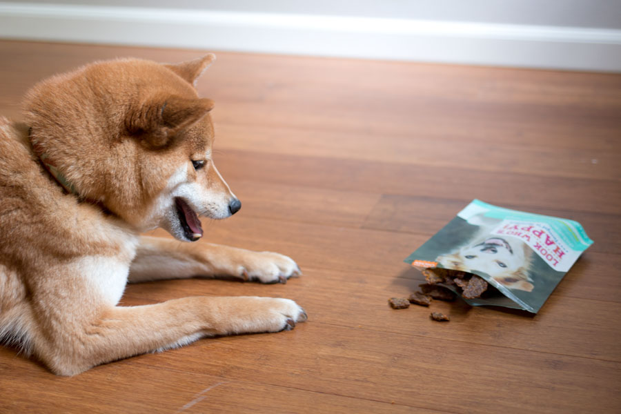 How to Photography Your Dog with Look Who's Happy Tempt'n Tenders Chicken & Pumpkin Treats / hellorigby seattle pet blog