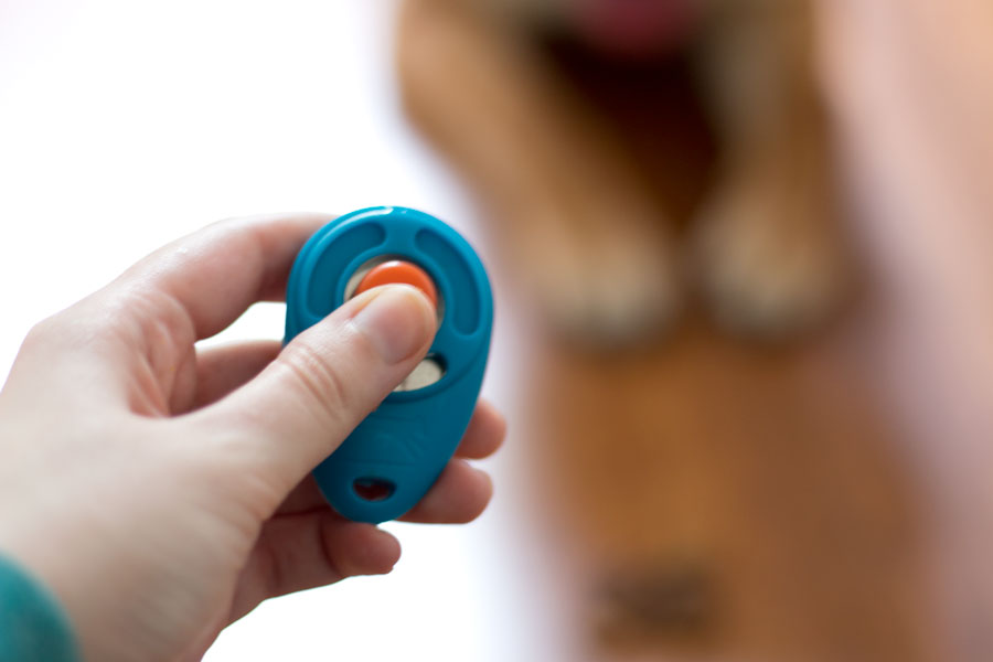 How to Photograph Your Dog with Look Who's Happy Treats and Clicker Training / hellorigby seattle pet blog