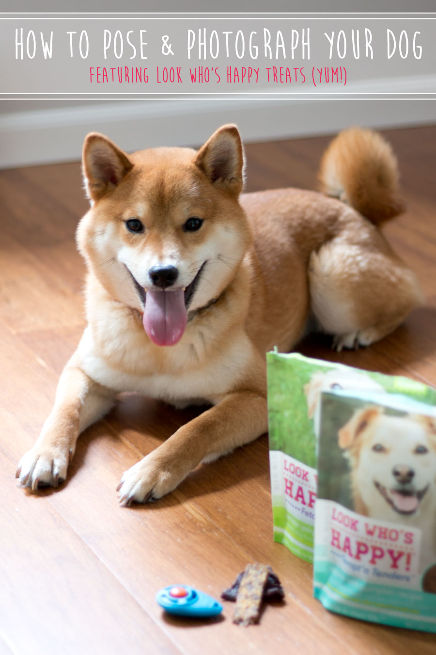How to Photograph Your Dog with Look Who's Happy Treats / hellorigby seattle pet blog