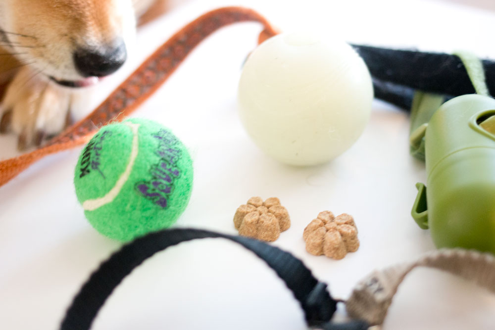 Rigby's Favorites: Earth Rated Bags, Kong Air Dog, Chuckit! Glow Ball, Fruitables Treats // hellorigby seattle pet blog