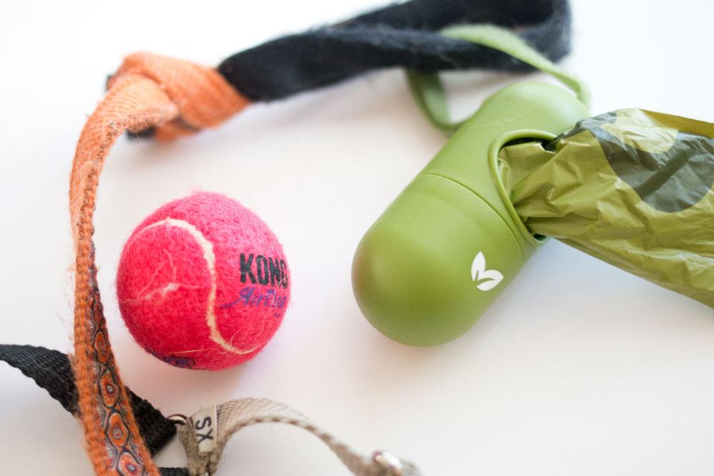 Rigby's Favorites: Kong Air Dog, Earth Rated PoopBags / hellorigby seattle pet blog
