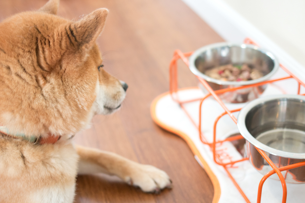 Rigby's Favorites: Bravo Homestyle Complete Freeze Dried Raw // hellorigby seattle pet blog