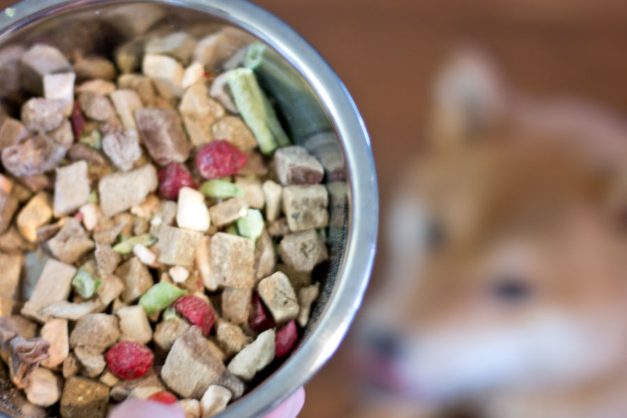 Bravo Pet Food: Freezed Dried Homestyle Complete Dog Food Review // hellorigby seattle pet blog