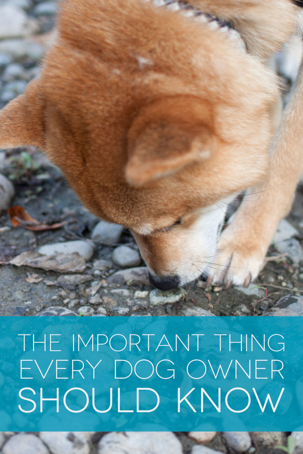 The Important Thing Every Dog Owner Should Know: How to Help a Choking Dog // hellorigby seattle lifestyle blog