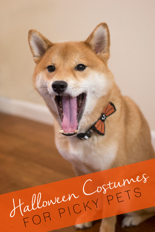 Halloween Costumes for Picky Dogs & Cats (Like my Shiba Inu, Rigby!) // hellorigby seattle lifestyle blog