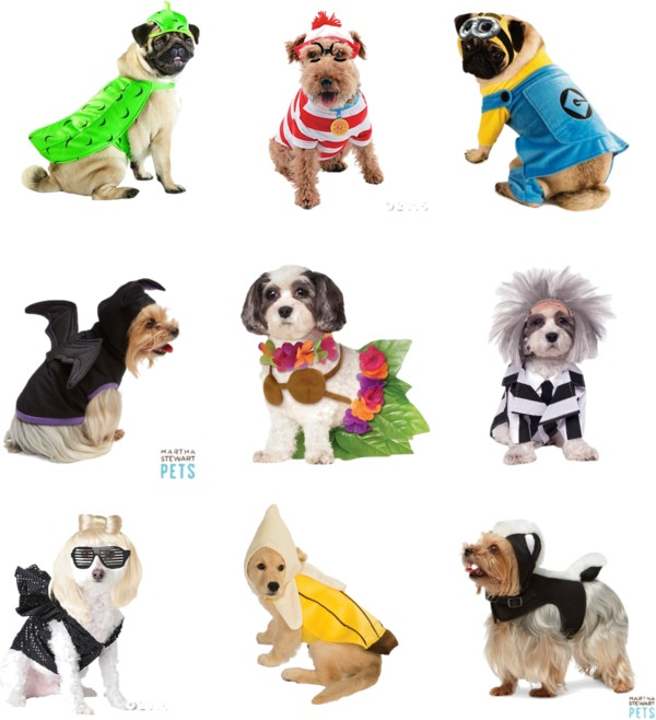 Halloween Pet Costumes for Dogs & Cats for 2015 // hellorigby seattle lifestyle blog