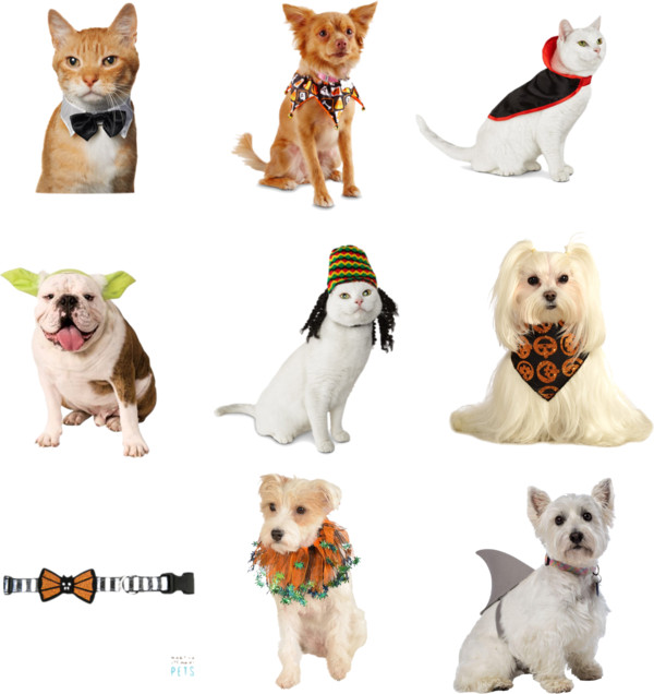 Halloween Pet Costumes for Picky & Difficult Dogs and Cats for 2015 // hellorigby seattle lifestyle blog