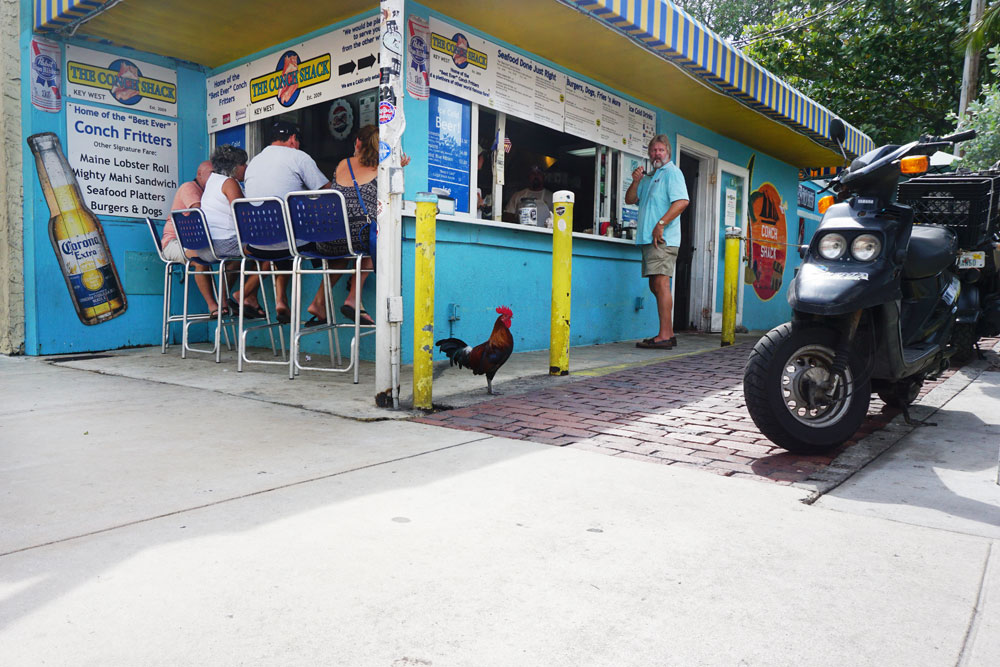 Key West Rooster at The Conch Shack // hellorigby.com seattle travel blog