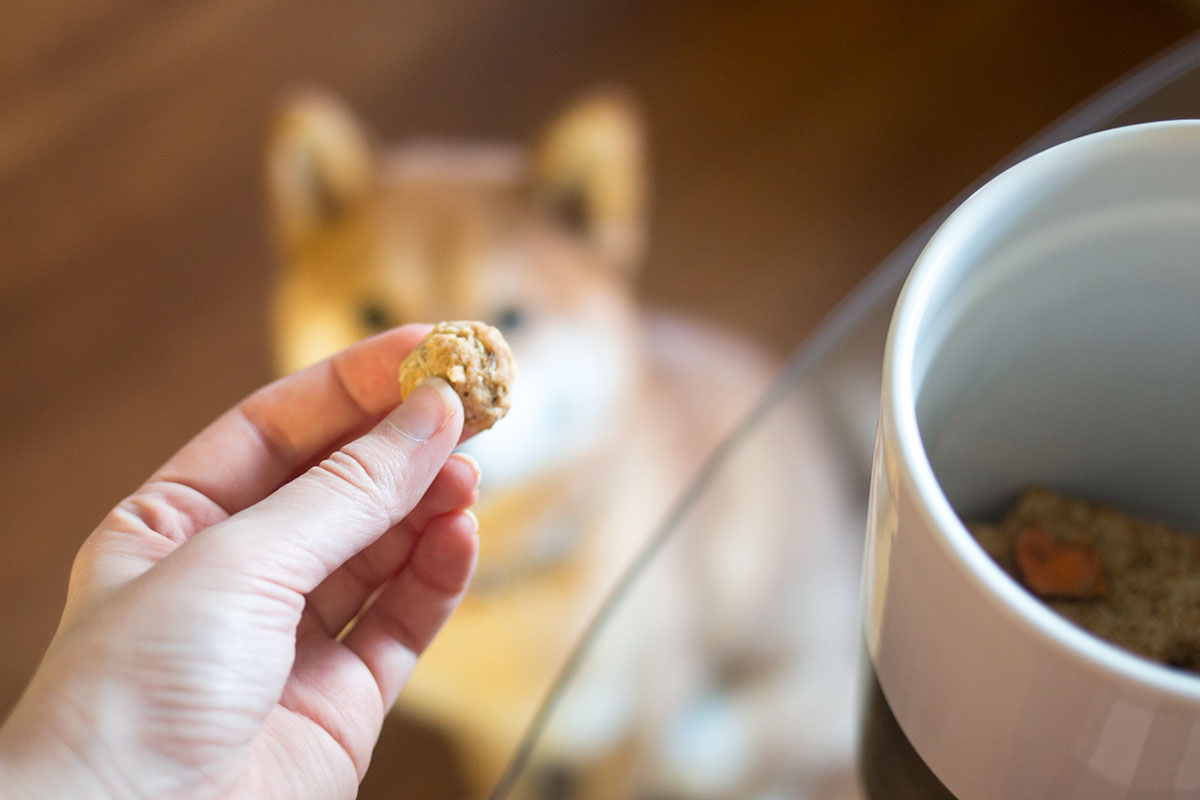 Easy Homemade Dog Treat Recipes // hellorigby.com seattle lifestyle & pet blog