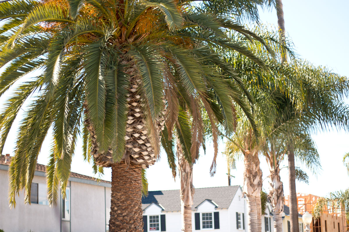 Balboa Island, Newport Beach Palm Trees // Hello Rigby Seattle Fashion & Lifestyle Blog