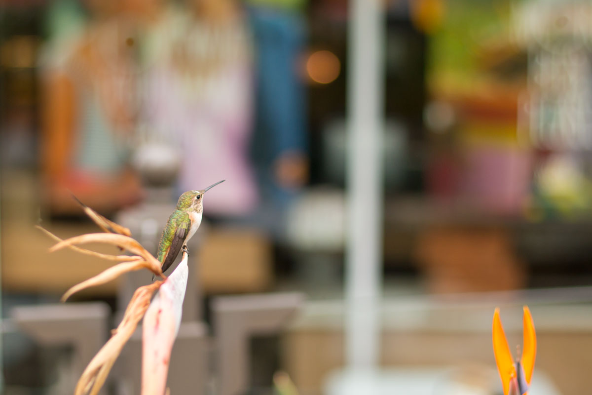 Hummingbird in Newport Beach, California // Hello Rigby Seattle Fashion & Lifestyle Blog