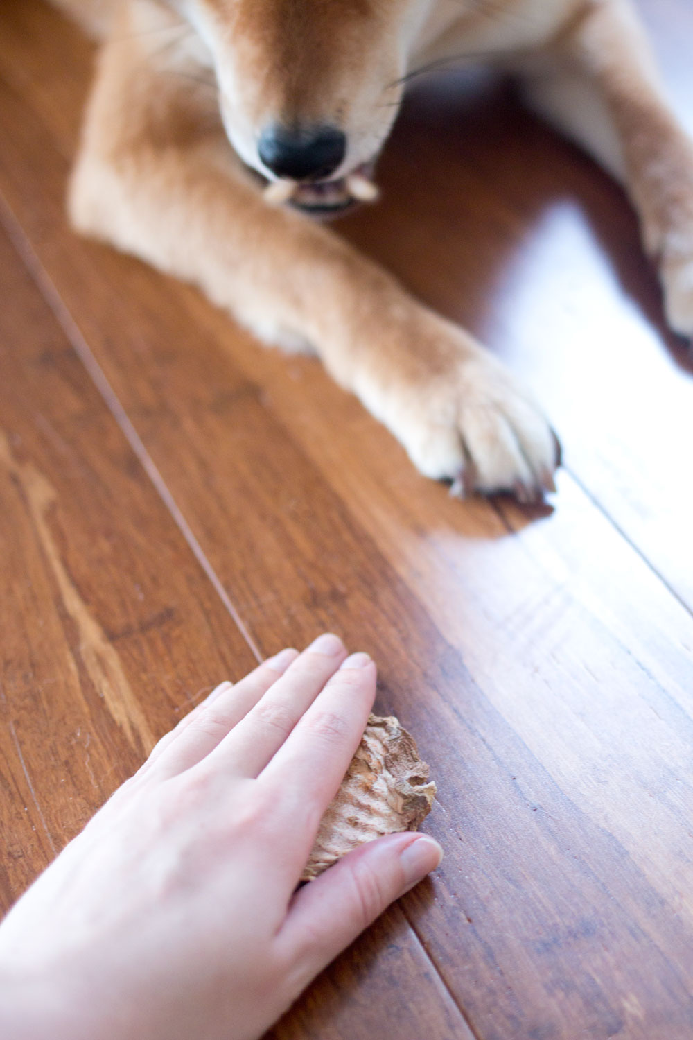 How to Teach Your Dog Leave It Command // Hello Rigby Seattle Pet & Lifestyle Blog