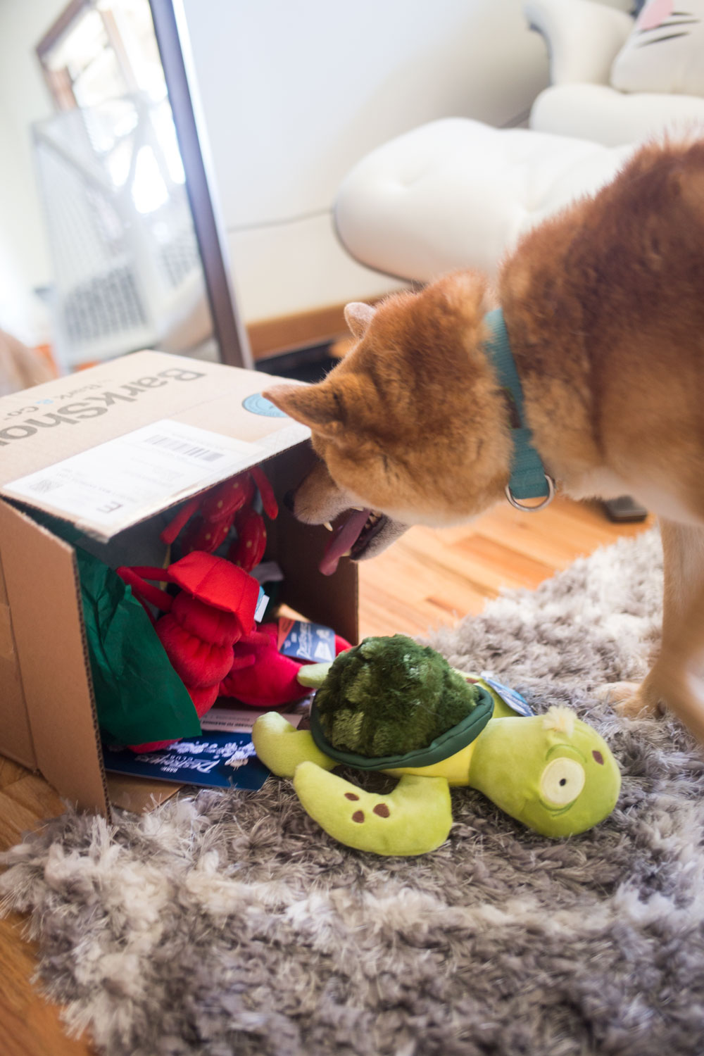 Bark Shop Destroyers Club Review // Moving with Dogs Tips + Tricks // Hello Rigby Seattle Pet Blog