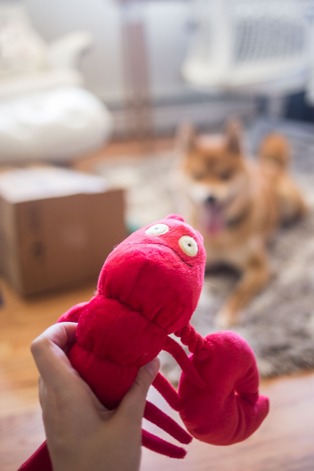 Keep Your Pups Busy: Moving Tips and Tricks for Dogs // Hello Rigby Seattle Lifestyle Blog